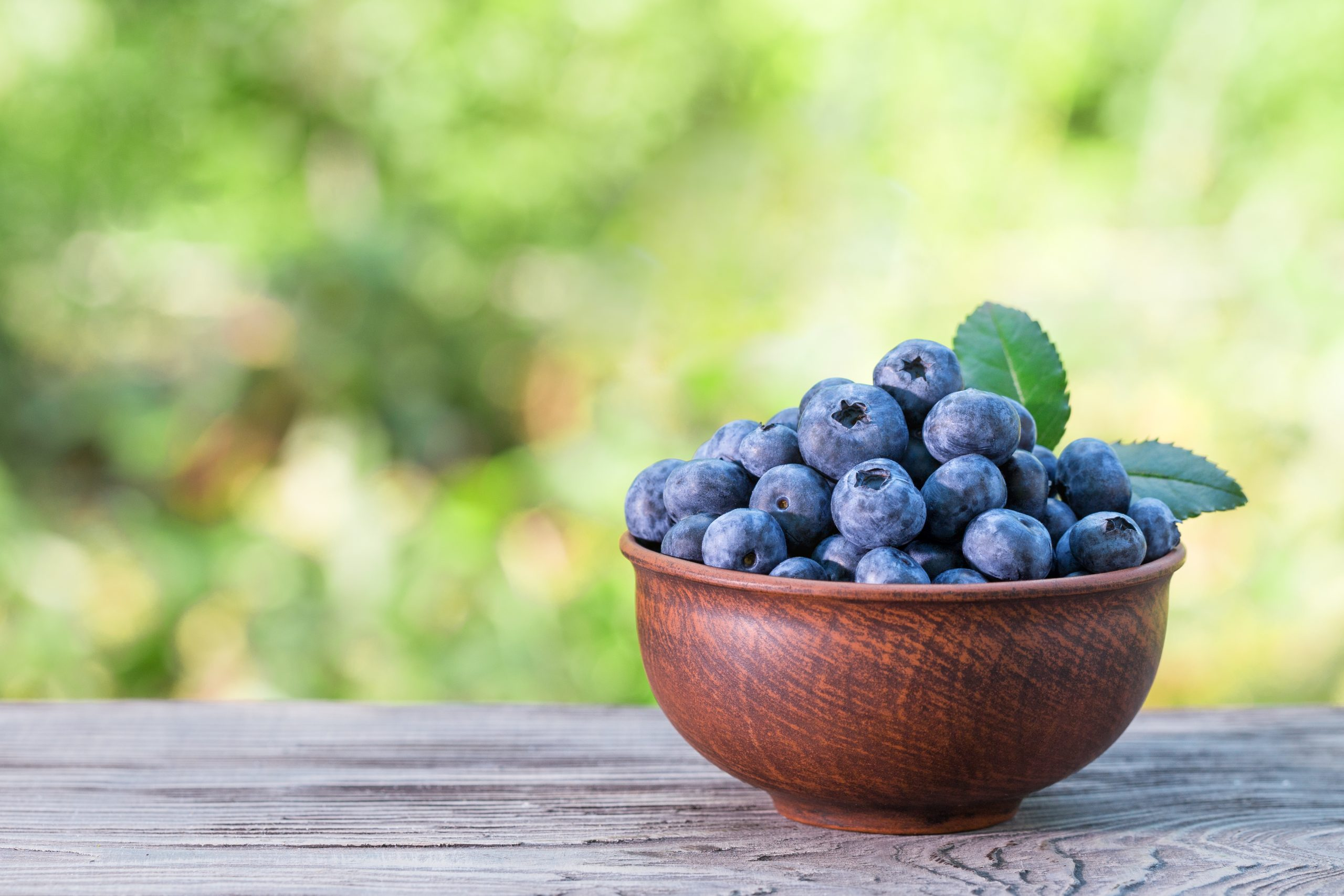 Blueberries in clay bowl on a wooden table. Green natural background. Summer still life. Natural product and harvest concept